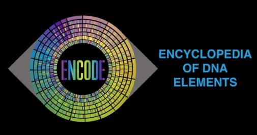 ENCODE is a public research consortium aimed at identifying all functional elements in the human and mouse genomes.